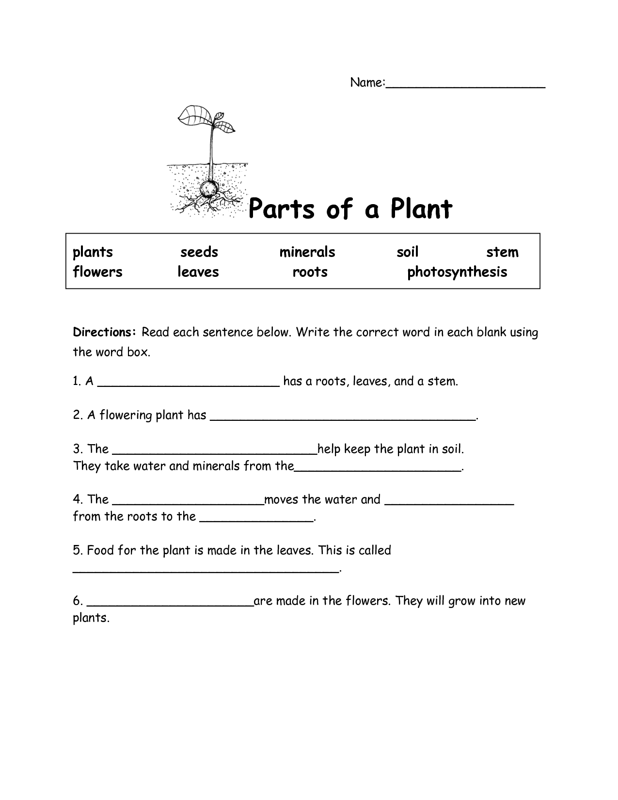 20 Flower Parts Crossword – Parts of a Plant Worksheet