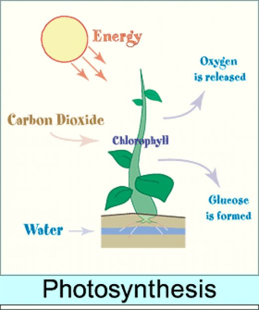 Week 1: What is Photosynthesis? - Education at Home